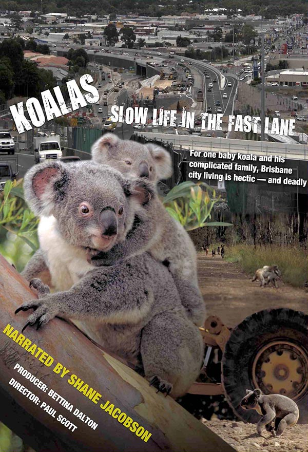 Koalas: SLow Life in the Fast Lane